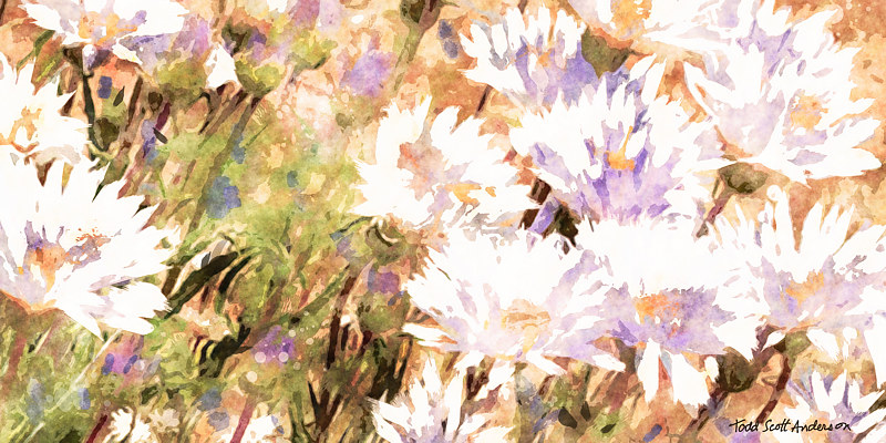 Print SONORA FLORA 18 D by Todd Scott Anderson