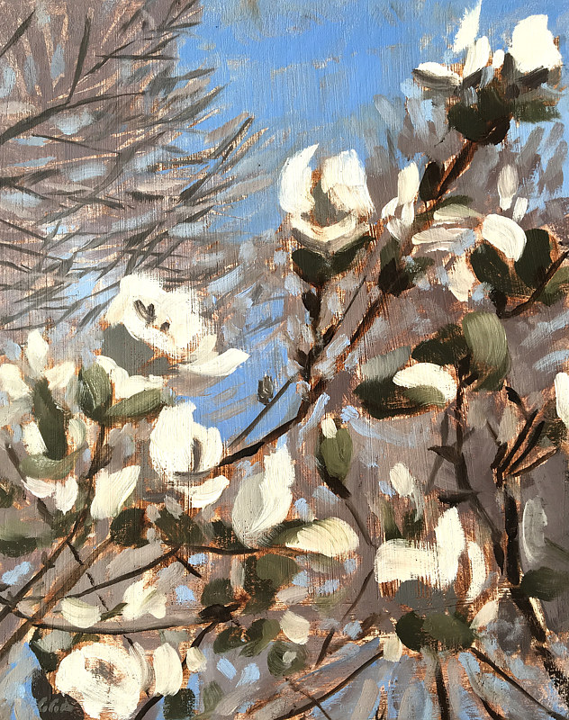 White Blossoms study by Ginger Arthur