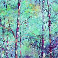 Print ASPENS 37 M by Todd Scott Anderson