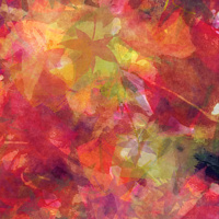 Print MAPLE LEAVES 35 M by Todd Scott Anderson