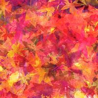 Print MAPLE LEAVES 33 M by Todd Scott Anderson