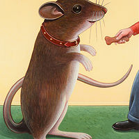 Pet Mouse by Adrienne Noble