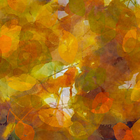Print ASPEN LEAVES 34 M by Todd Scott Anderson