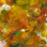 Print ASPEN LEAVES 33 M by Todd Scott Anderson