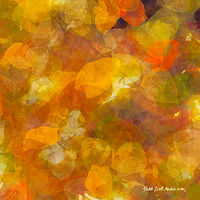 Print ASPEN LEAVES 30 M by Todd Scott Anderson