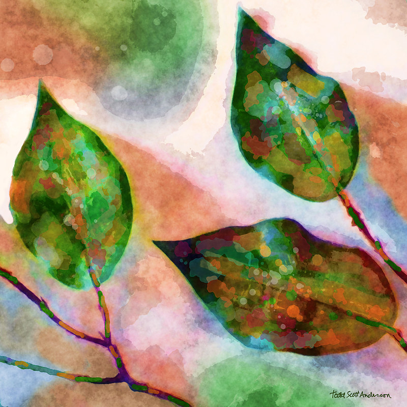 Print FICUS 18 T by Todd Scott Anderson
