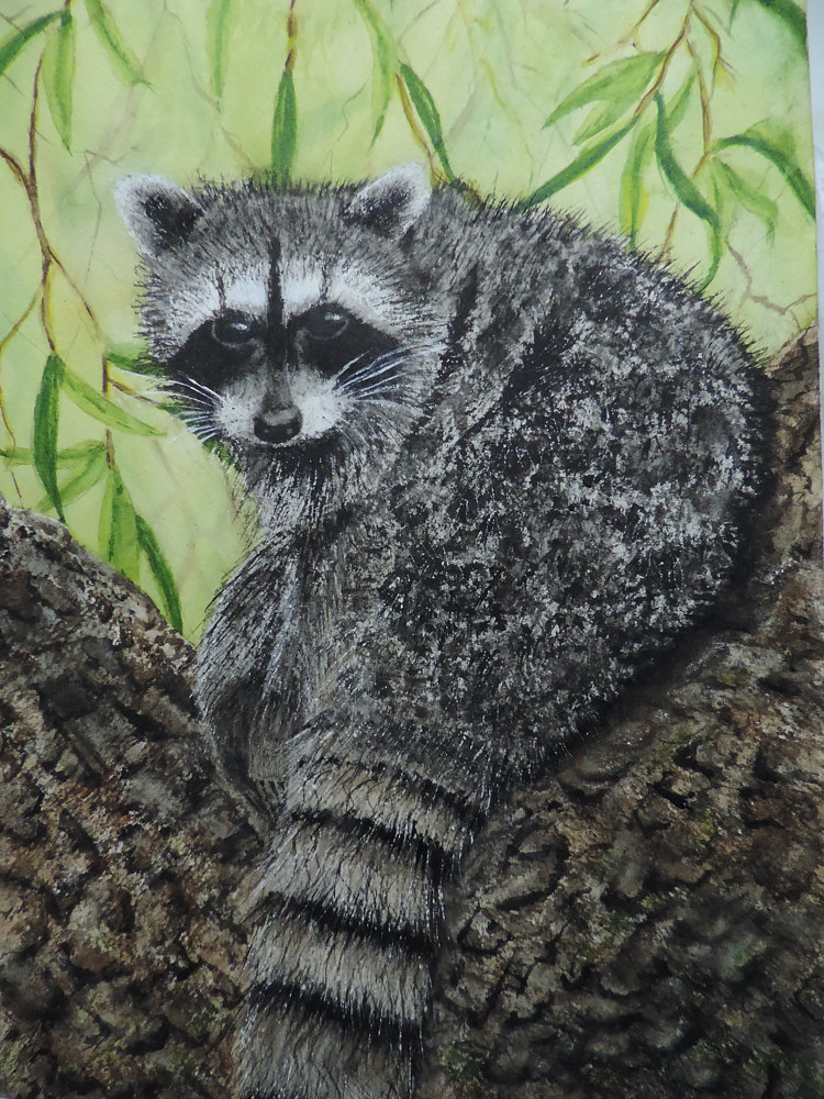 Watercolor Racoon Encounter by Vicki Allesia