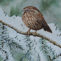 Watercolor Song Sparrow by Vicki Allesia