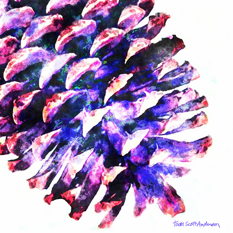 Print PINE CONE ON WHITE 2 WPC by Todd Scott Anderson