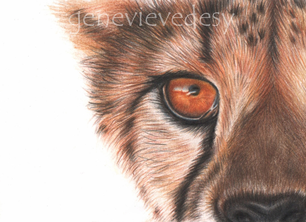 Dessin miniature ACEO - Guépard, 2016 by Genevieve Desy