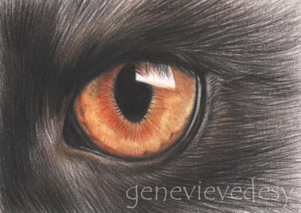 Dessin miniature ACEO - Chat noir by Genevieve Desy