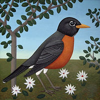 American Robin by Adrienne Noble
