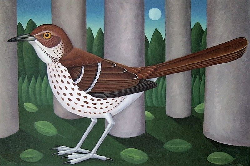 Brown Thrasher by Adrienne Noble