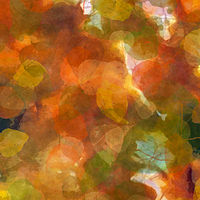 Print ASPEN LEAVES 35 M by Todd Scott Anderson