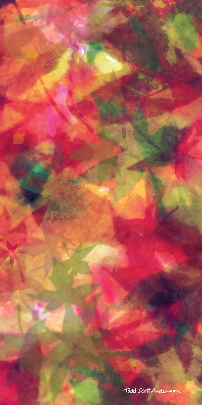 Print MAPLE LEAVES 36 M by Todd Scott Anderson