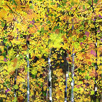 Print ASPENS 33 M by Todd Scott Anderson