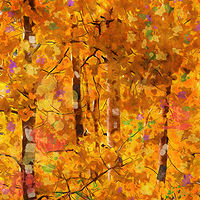 Print ASPENS 32 M by Todd Scott Anderson