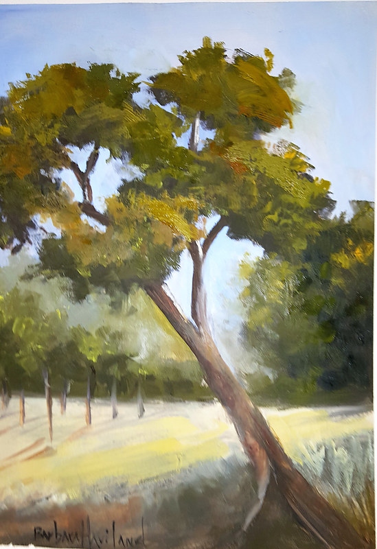 Painting Oak Tree  by Barbara Haviland