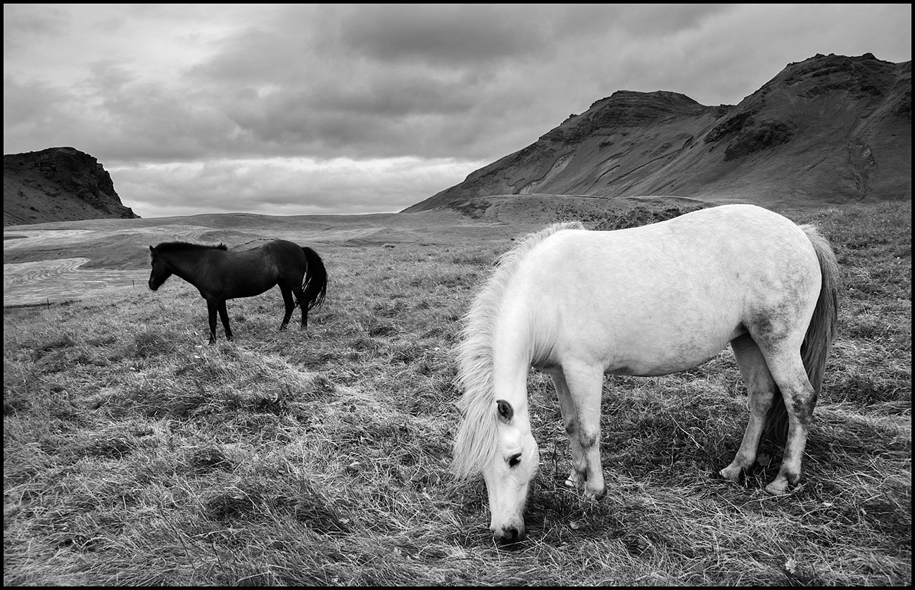 AAA_9372 B&W 2 Horses copy by Jim Friesen
