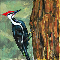 Pecker_6x6 by Cody Blomberg