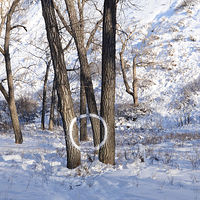 Print Snow Ring by Troy Nickle