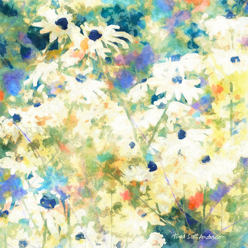 Print MOUNTAIN WILDFLOWERS 12 M by Todd Scott Anderson