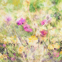 Print MOUNTAIN WILDFLOWERS 17 M by Todd Scott Anderson
