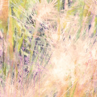 Print MOUNTAIN MEADOW 6 M by Todd Scott Anderson