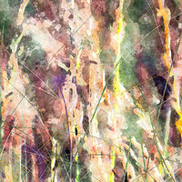 Print MOUNTAIN MEADOW 37 M by Todd Scott Anderson