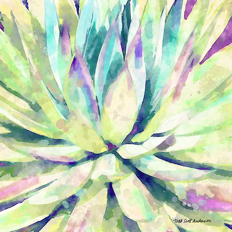 Print MOJAVE AGAVE 15 D copy by Todd Scott Anderson