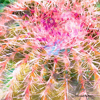 Print MOJAVE CACTUS 28 D by Todd Scott Anderson