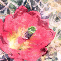 Print MOJAVE CACTUS 30 D by Todd Scott Anderson