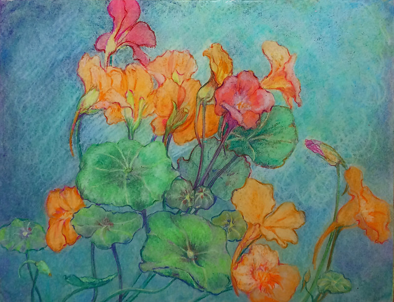 Nasturiums by Frederica  Hall