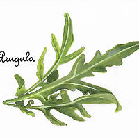 Arugula by Susan Lynch