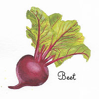Beet by Susan Lynch