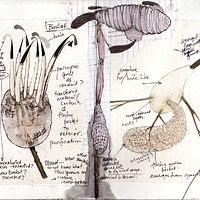 Field notes by Tamara Rusnak