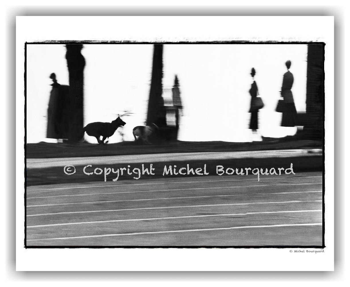 Running dog in the park by Michel Bourquard