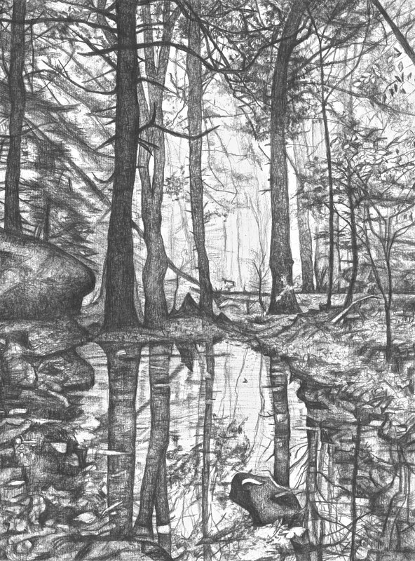 Drawing Nature Study by Tracy  Dunbar