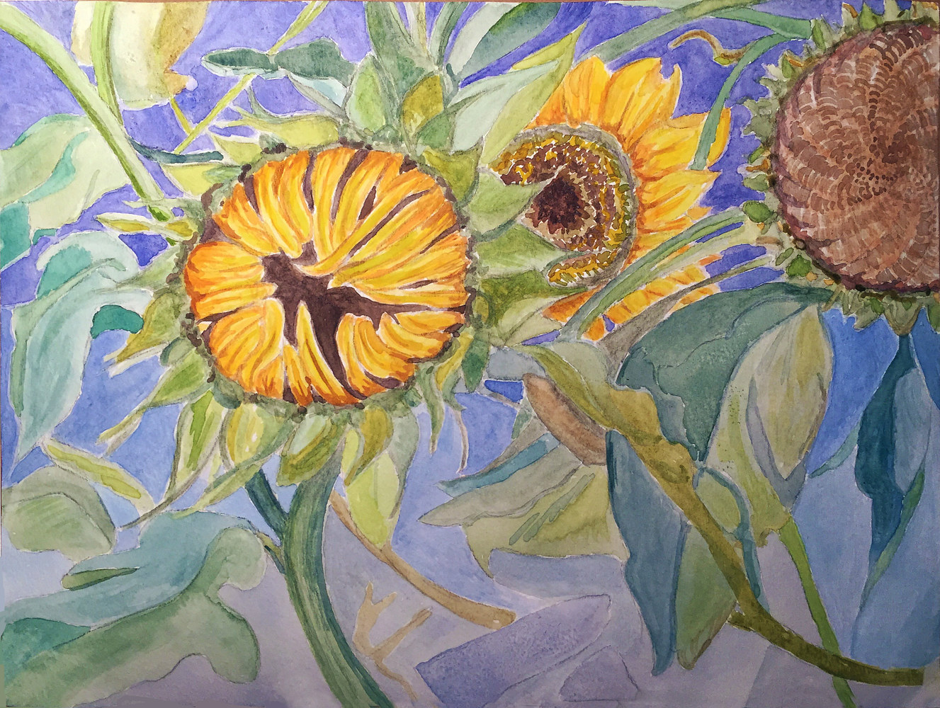 Watercolor Sunflowers by Anastasia O'melveny