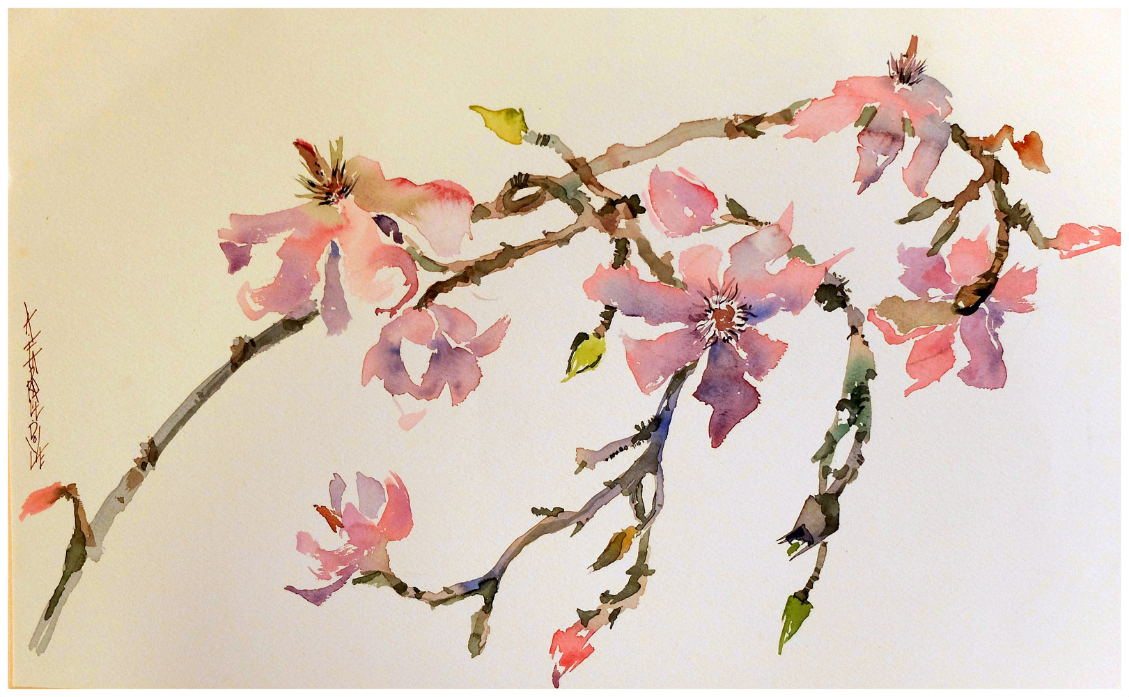 Magnolia spray, 16x20, watercolour by Anne Farrall Doyle