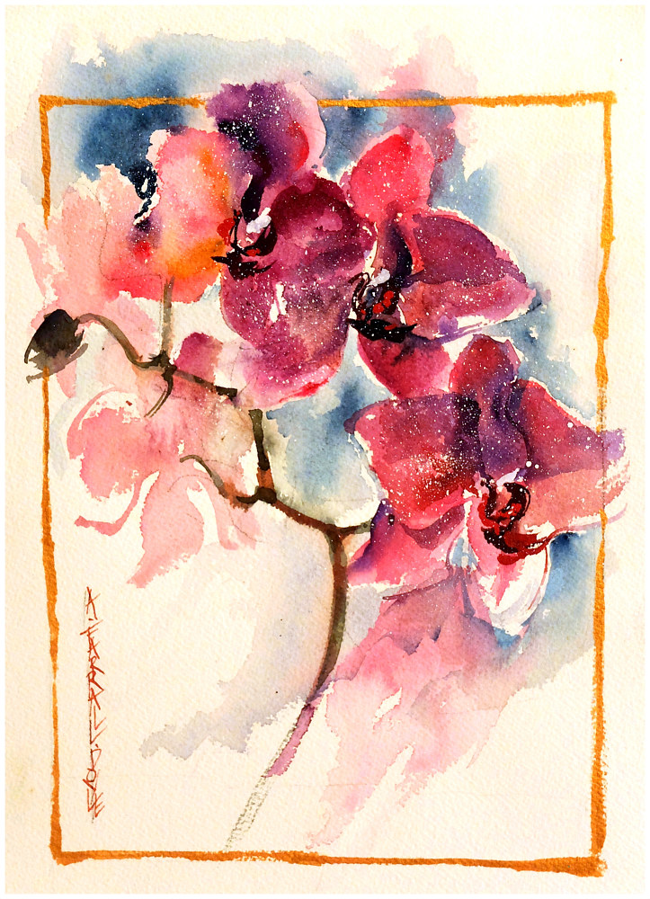 Orchid Pink, 10x12, watercolour by Anne Farrall Doyle