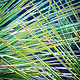 Print Overlapping Palm Fronds by Jacqueline Bell Johnson