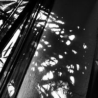Photography Bamboo Shadows 2 by Jacqueline Bell johnson