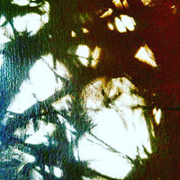 Photography Bamboo Shadows 1 by Jacqueline Bell johnson