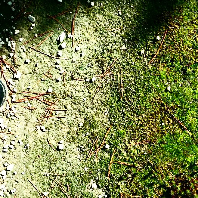 Photography Moss on Old Concrete by Jacqueline Bell johnson