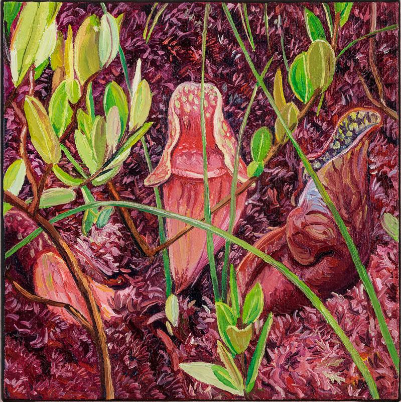 Oil painting Pitcher Plants by Michael McEwing