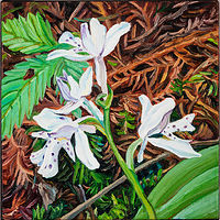 Oil painting Shae Lake Orchid by Michael McEwing