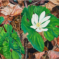 Oil painting Spring Bloodroot by Michael McEwing