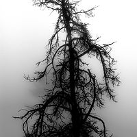 """Skeletal Snag"" by Hunter Madsen"