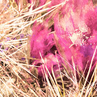 Print SONORA CACTUS 70 D by Todd Scott Anderson